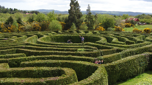 Angled view of a hedged maze with people making their way through it